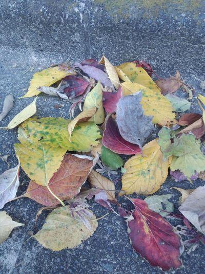 カラフル落ち葉と追いかけっこいたちごっこ